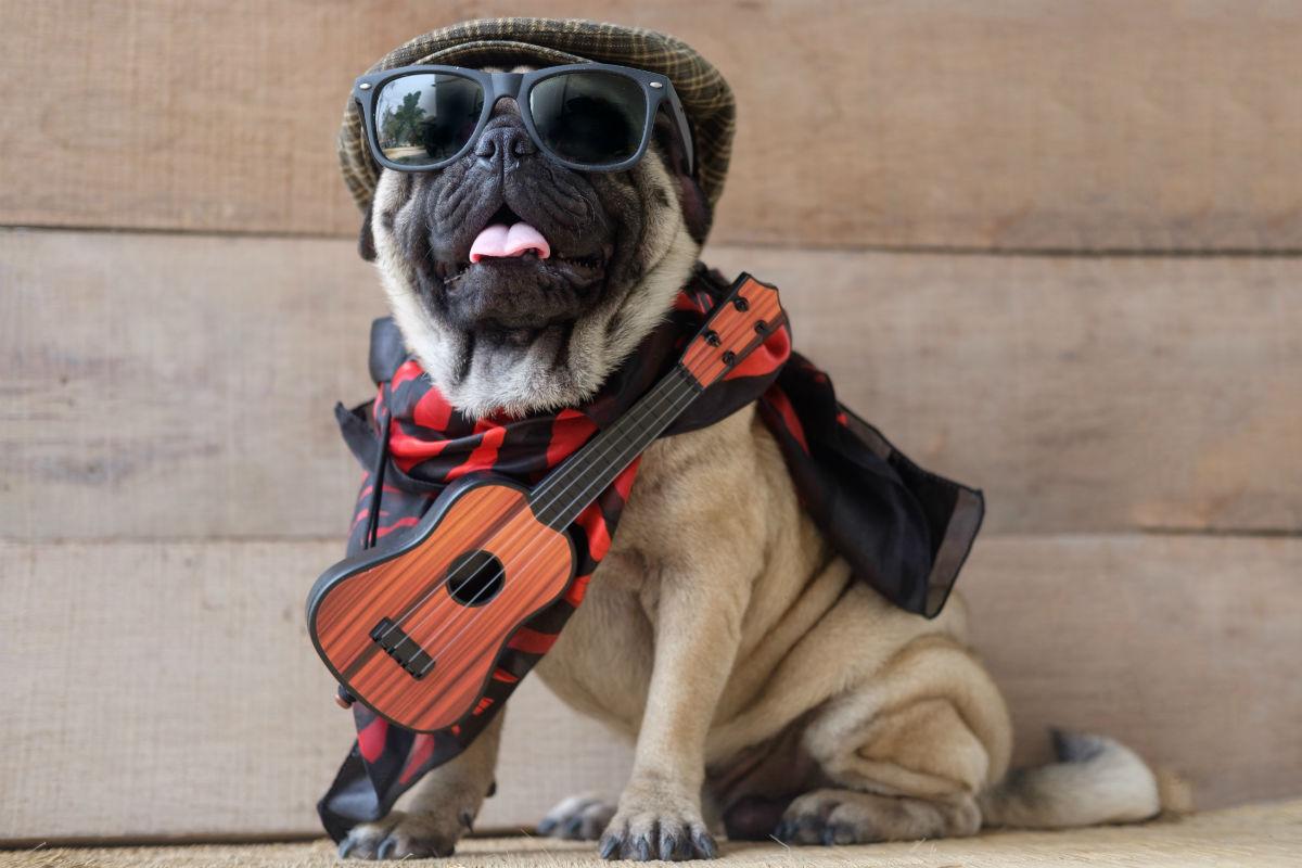 7 melhores raças de cachorros para idosos