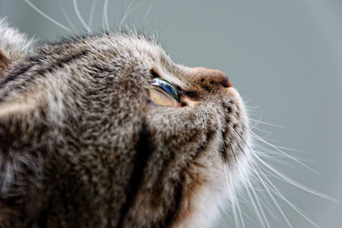 Quantos anos vive um gato é um mistério ainda a ser desvendado.