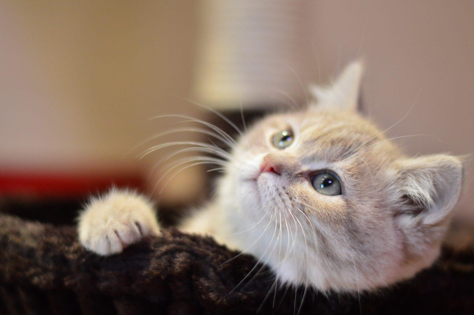 São muitas as curiosidades sobre quantos anos vive um gato.
