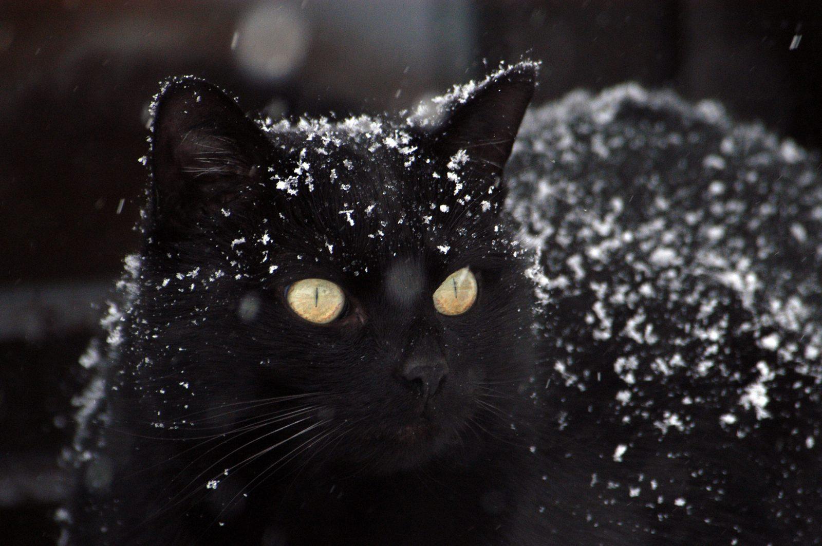 Você pode ajudar a aumentar quantos anos vive um gato