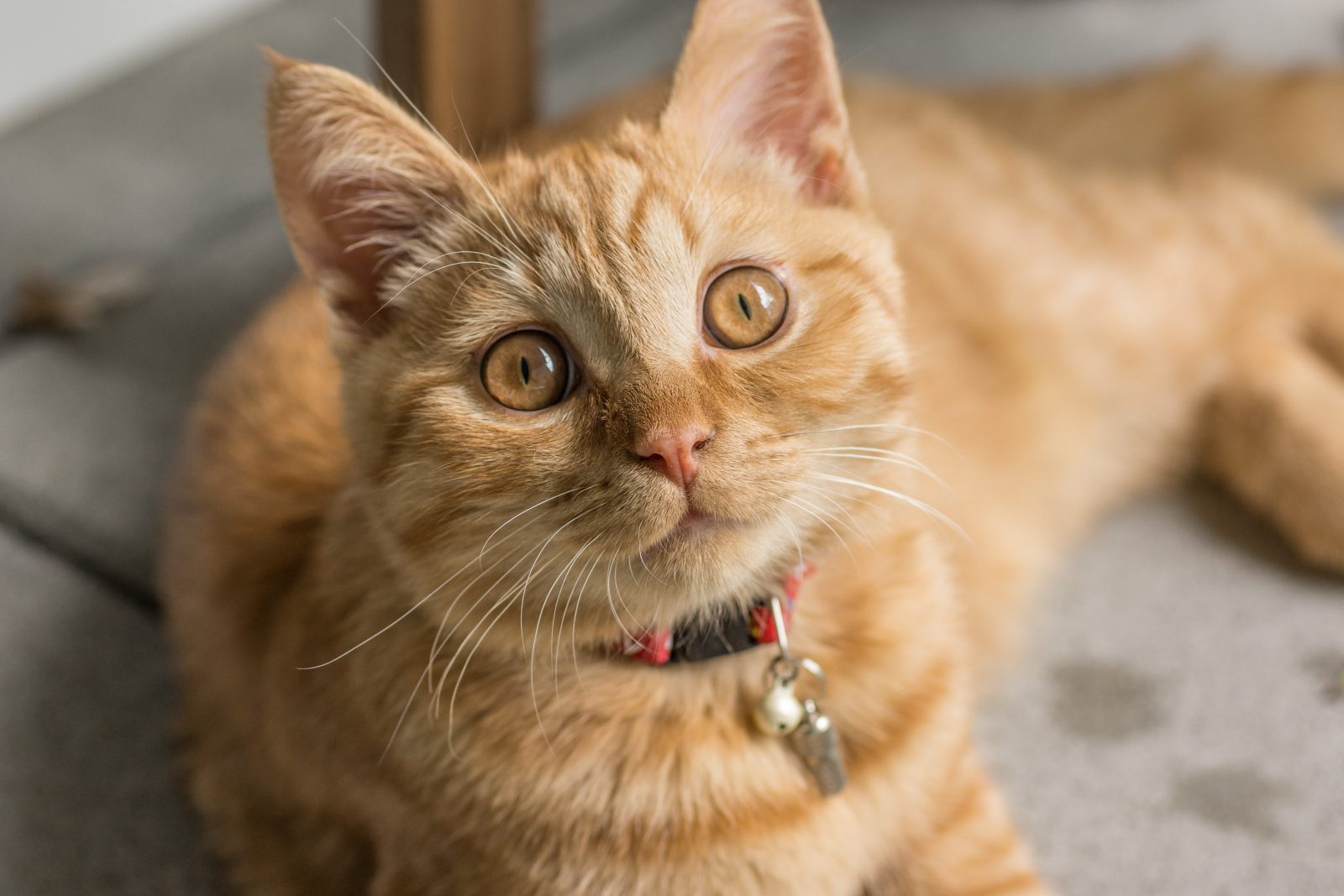 Quantos anos vive um gato vai depender de como ele é cuidado.