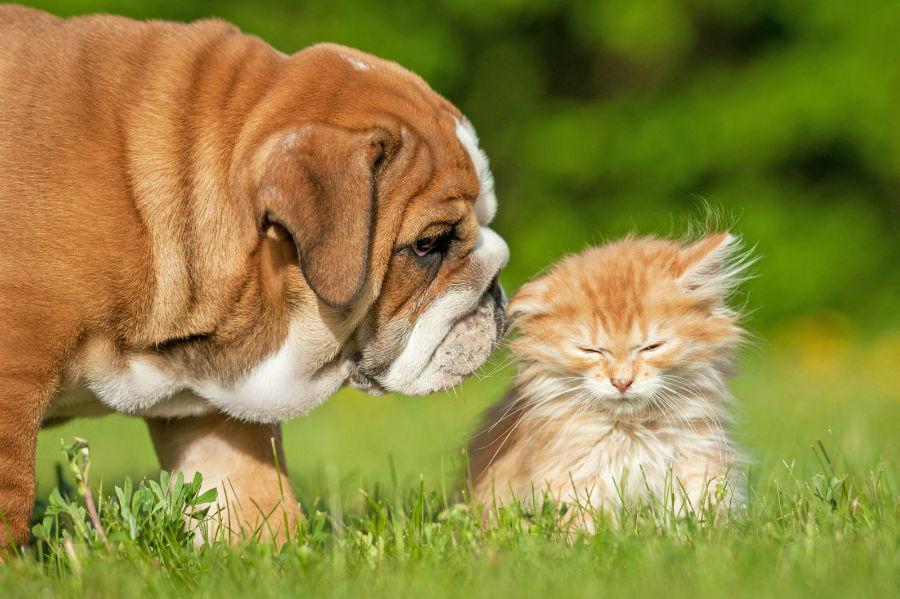racas-bully-briga