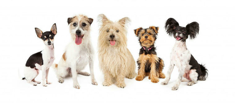 Cachorro pequeno: cachorros pequenos de todas as raças.