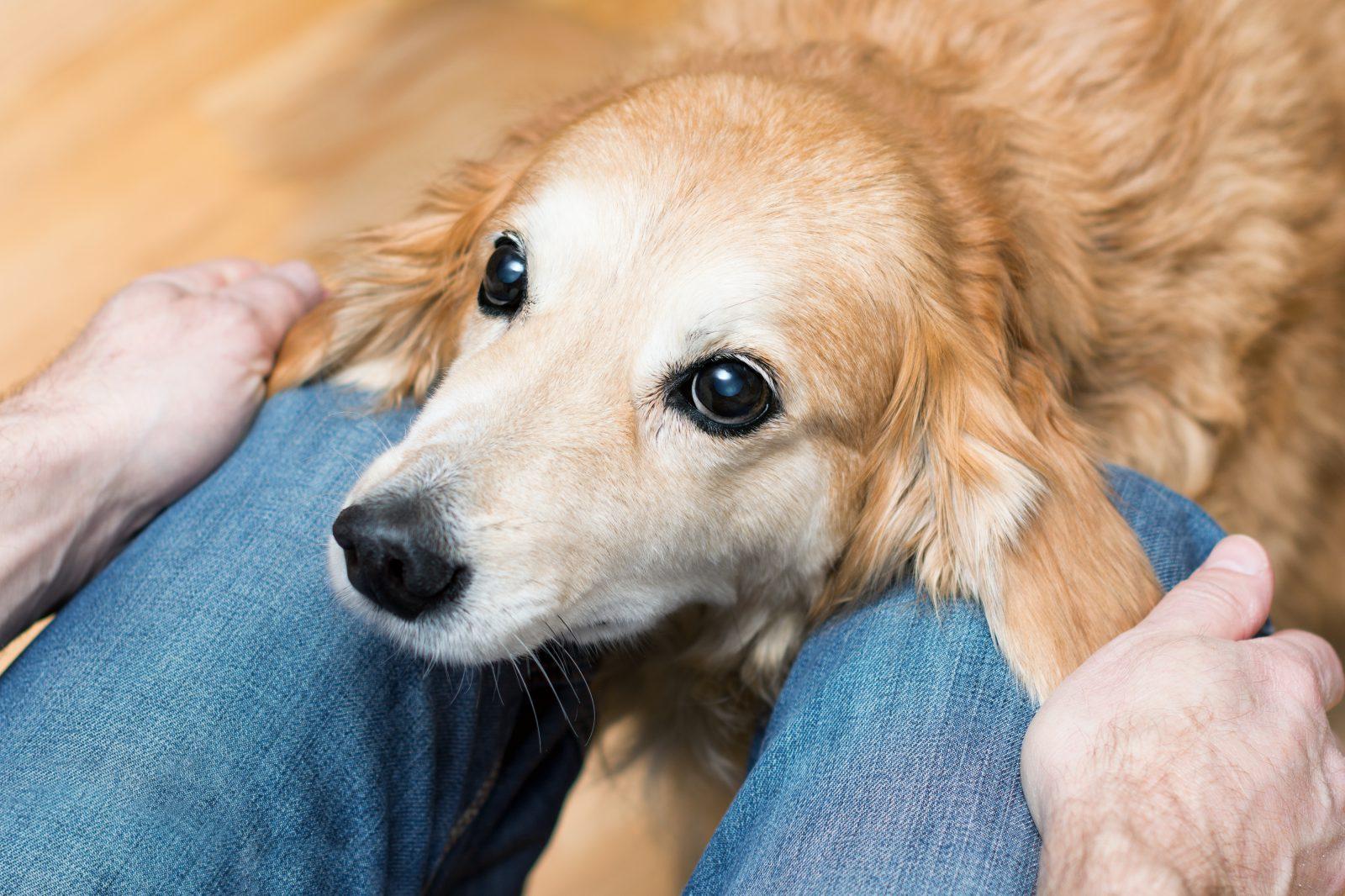 razoes-adotar-cachorro-mais-velho-companheirismo