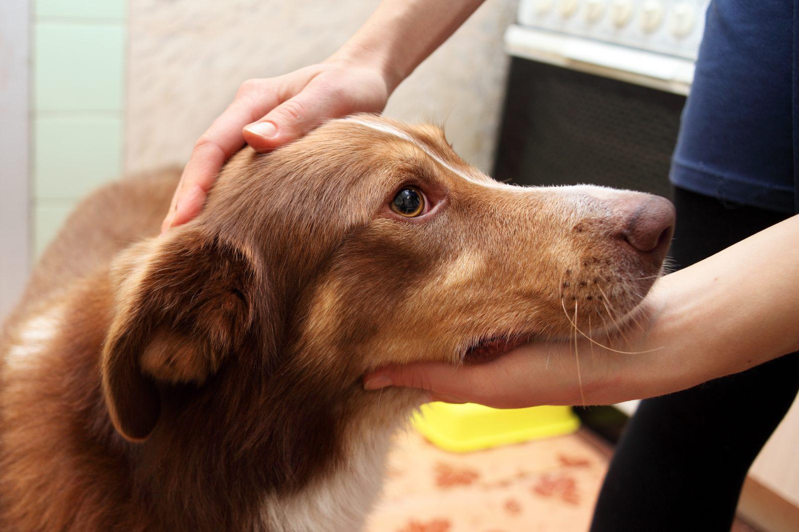 razoes-adotar-cachorro-mais-velho-treinados