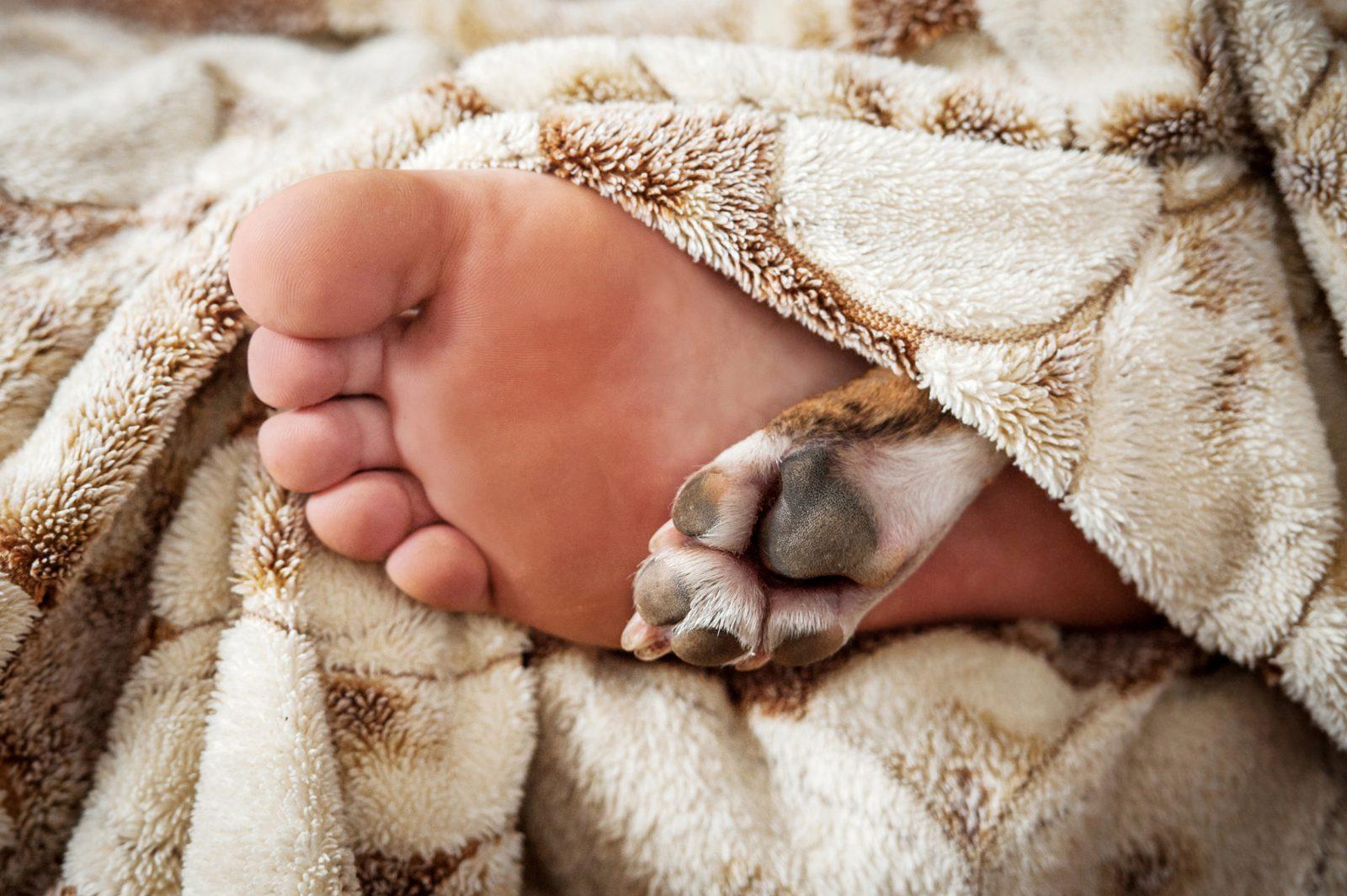 5 Razões para o seu cachorro dormir na cama com você