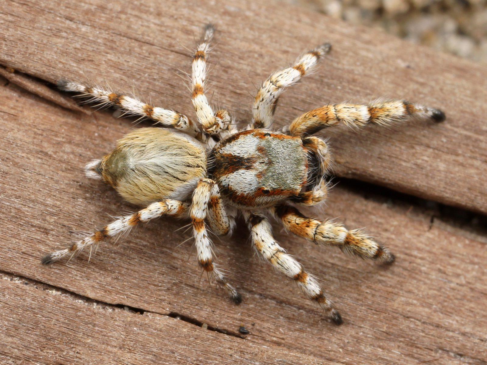 Sonhar com aranha atacando significa conflito com a sua mãe.