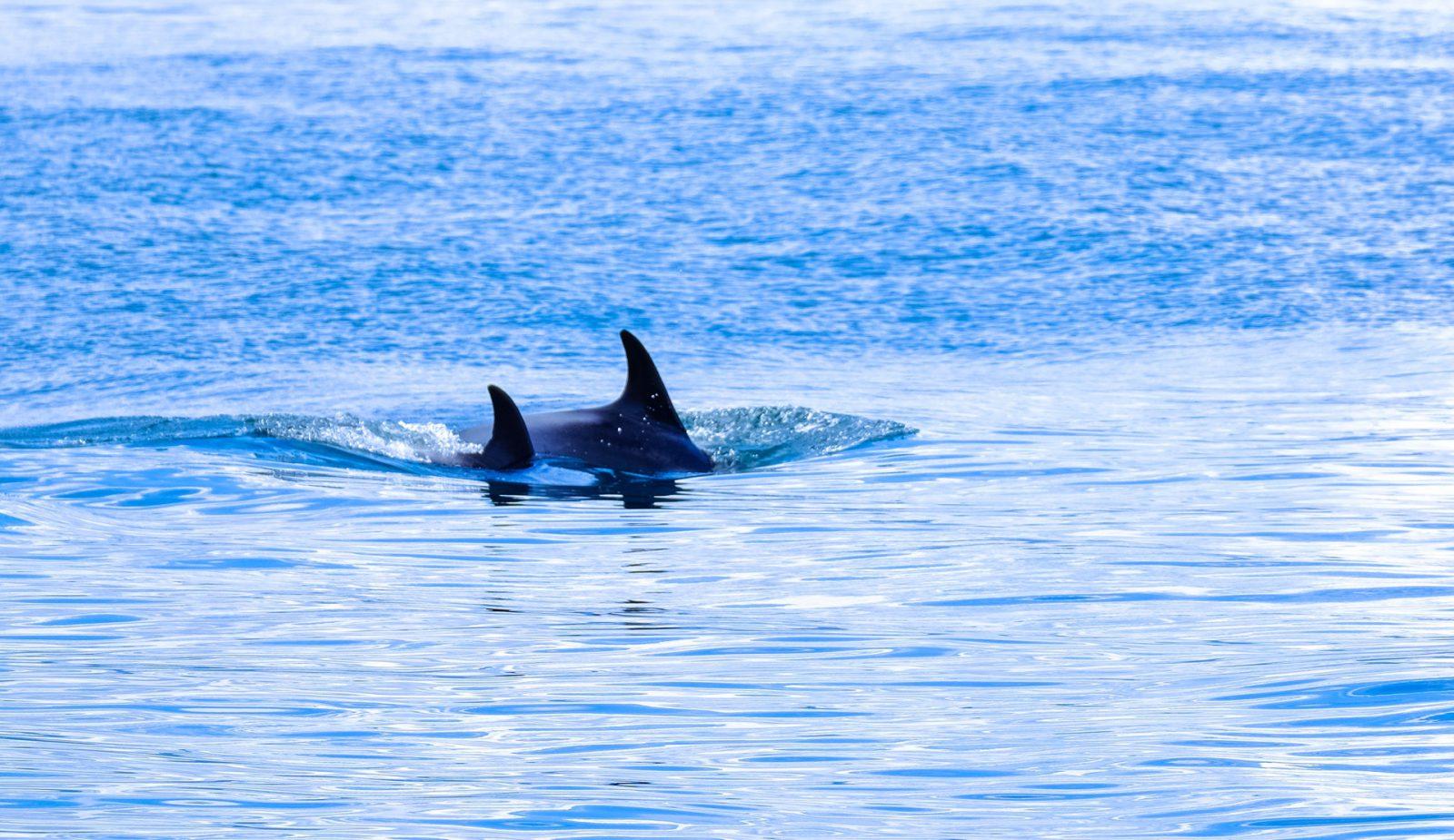 Sonhar com baleia jubarte é sinal de que vai encontrar o seu caminho.