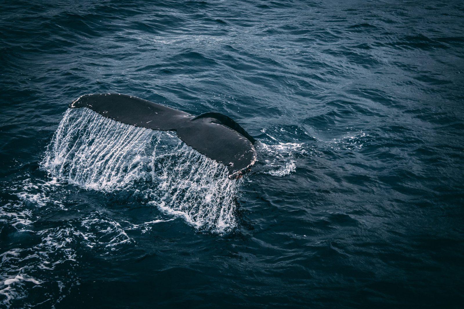 Sonhar com baleia azul significa necessidade de isolamento.