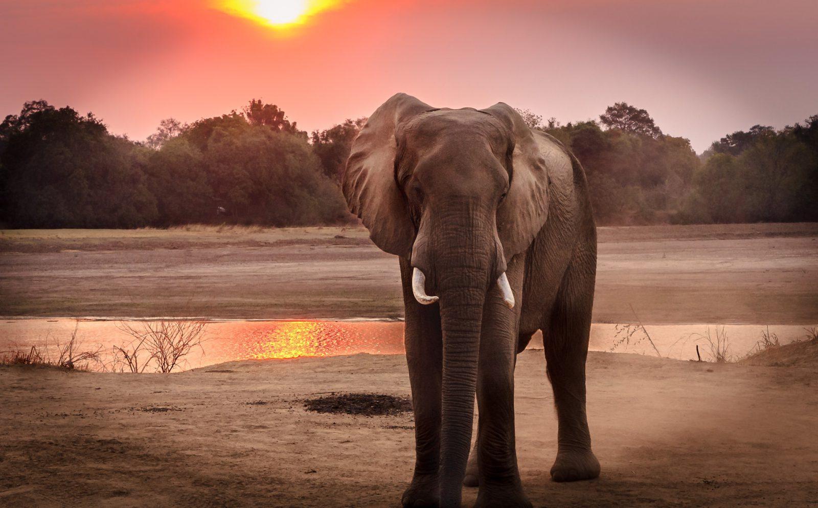 Sonhar com elefante preto indica algo positivo.