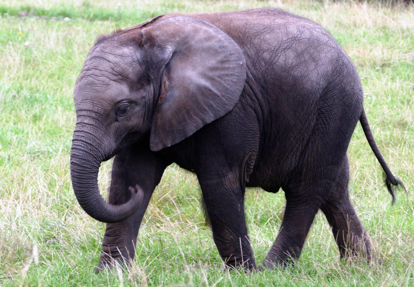 Sonhar com elefante pode remeter a poder e força.