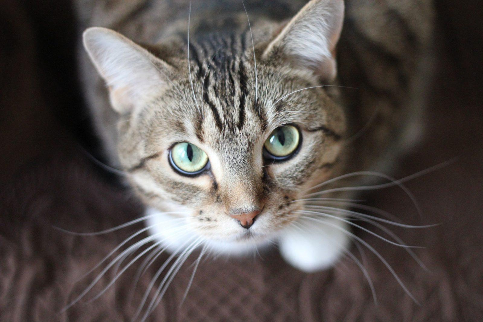Sonhar com gato miando indica que estão falando mal de você pelas costas.