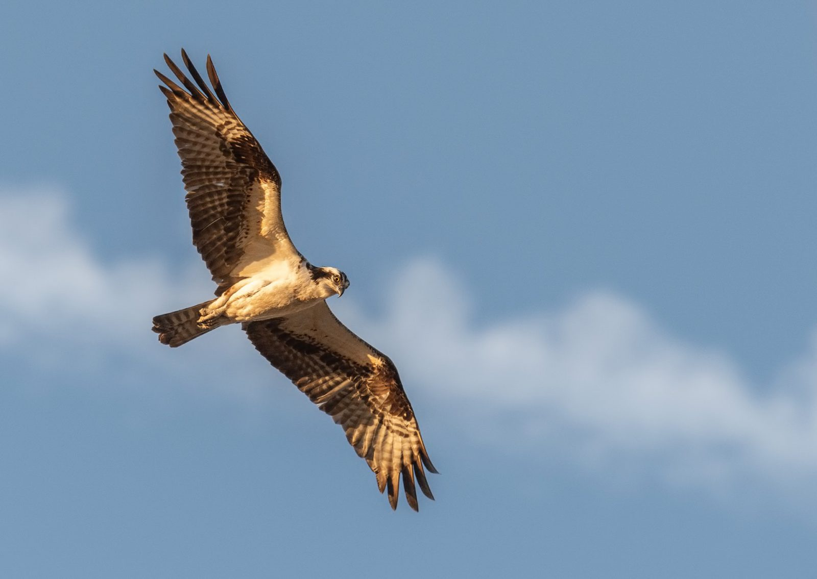 Sonhar com gavião voando simboliza o respeito e o reconhecimento da sociedade