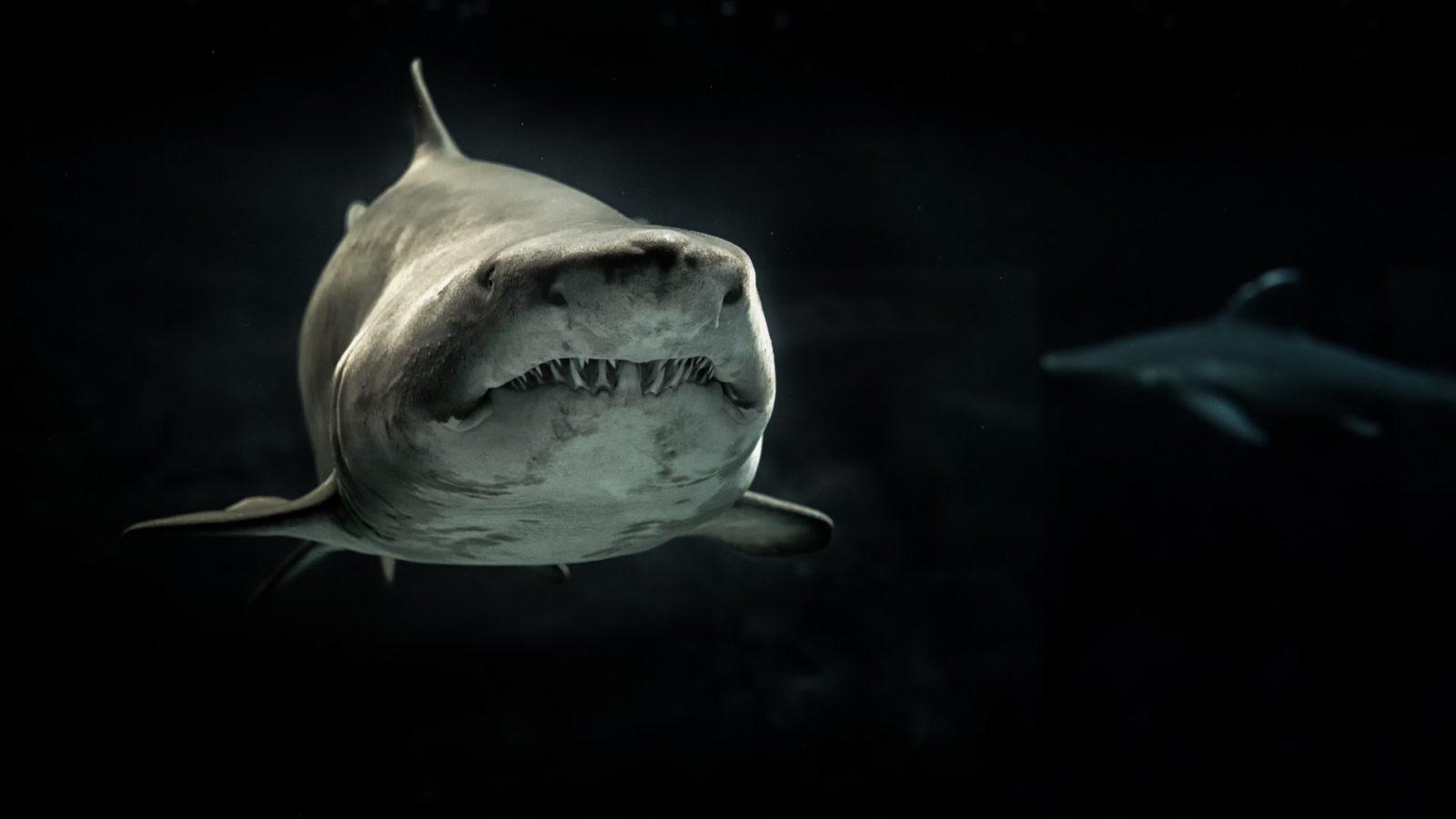 sonhar com tubarão