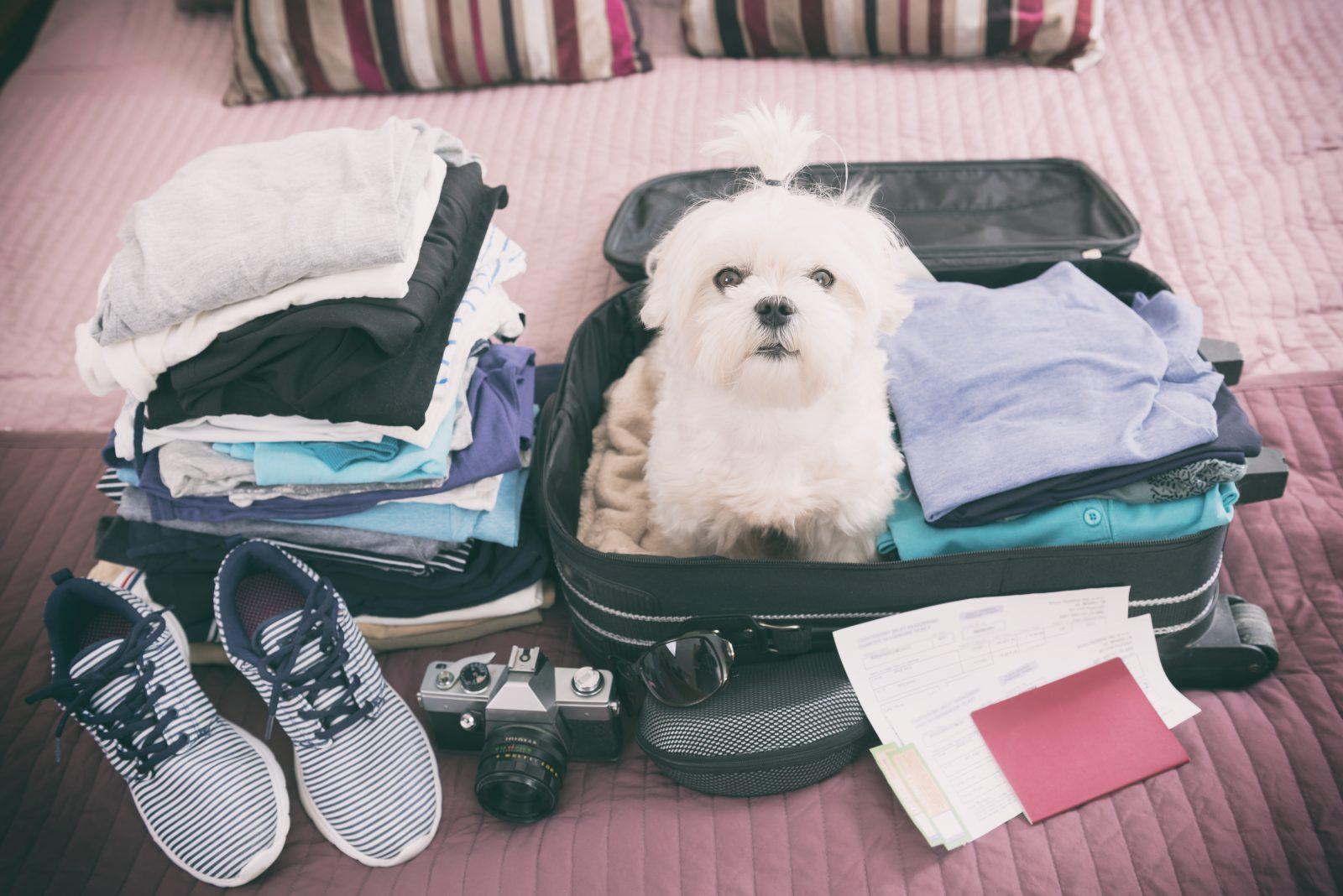 9 coisas que você precisa para viajar com seu cachorro