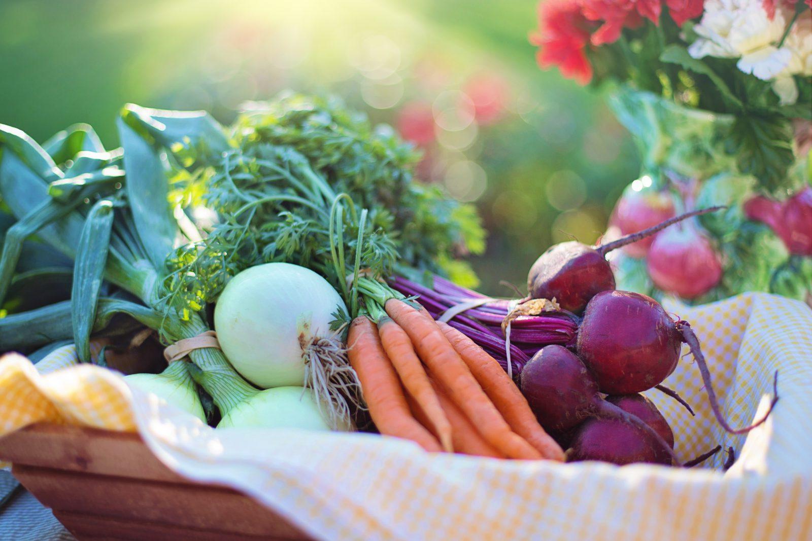 Vitamina para cachorro: tijela com alimentos frescos, vegetais e legumes.